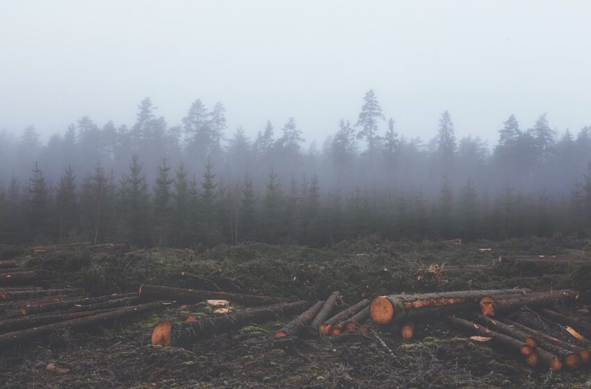The Protection of the Forests is Global Public Health